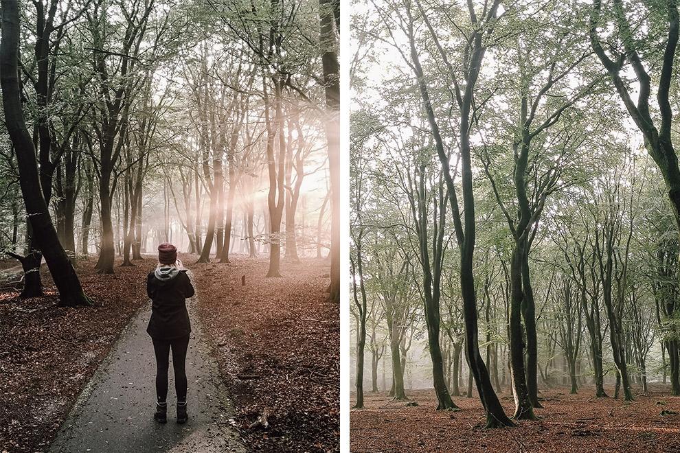 Een bos vol dansende bomen tijdens een herfstachtige zonsopkomst
