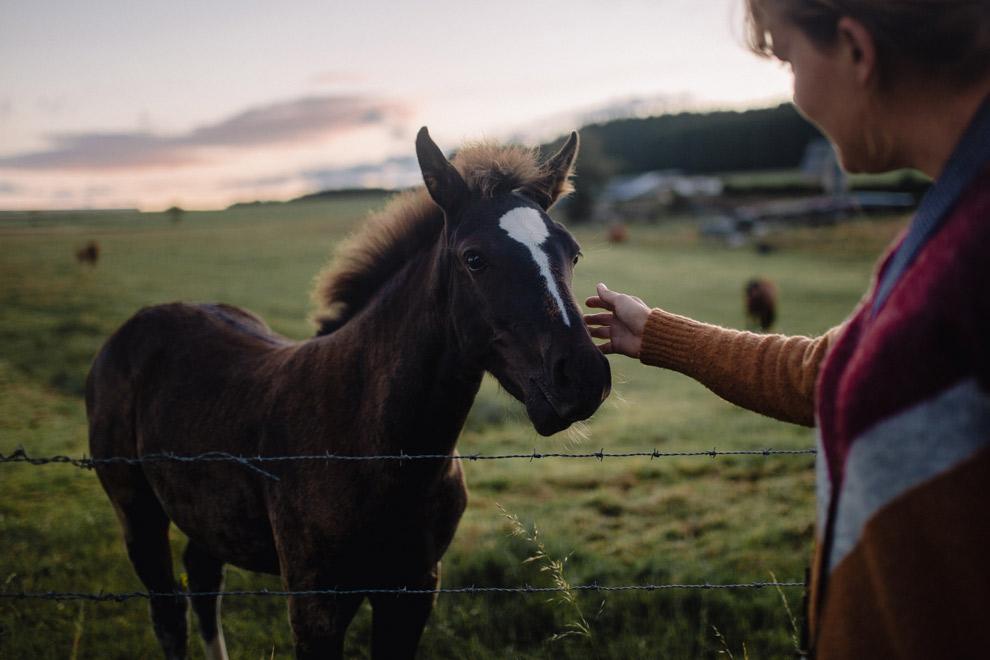 Een paard aaien langs de Transardennaise