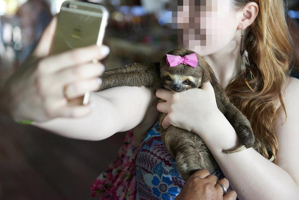 Selfie maken met luiaard in arm is dierenleed