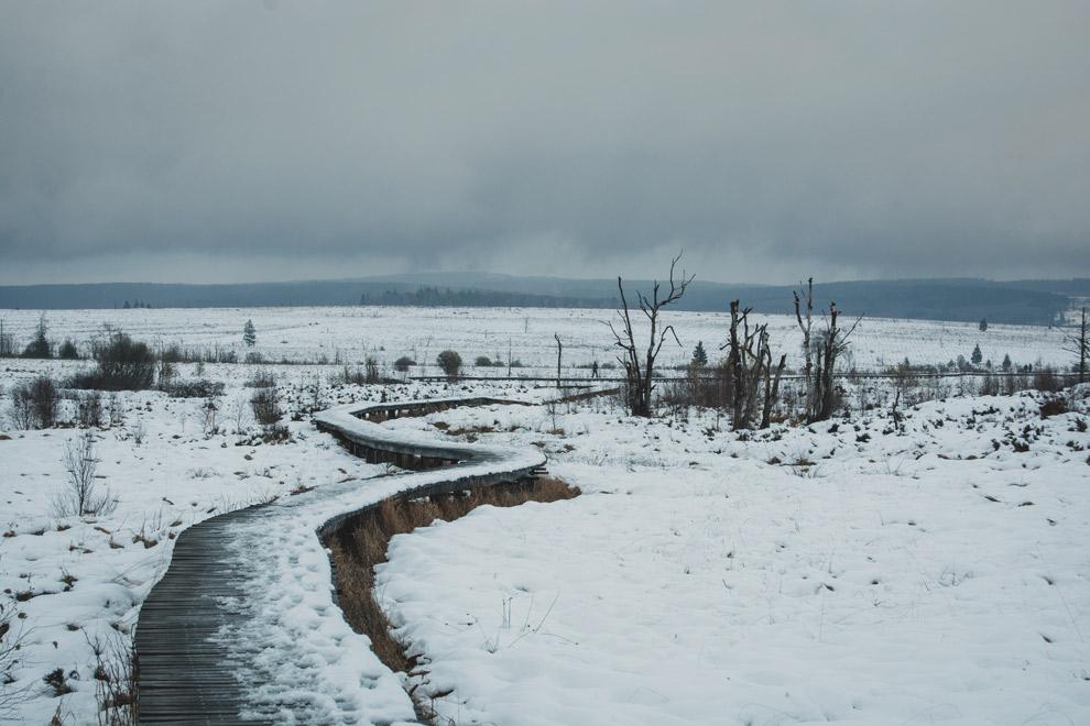 Natuurpark van de Hoge Venen in de sneeuw