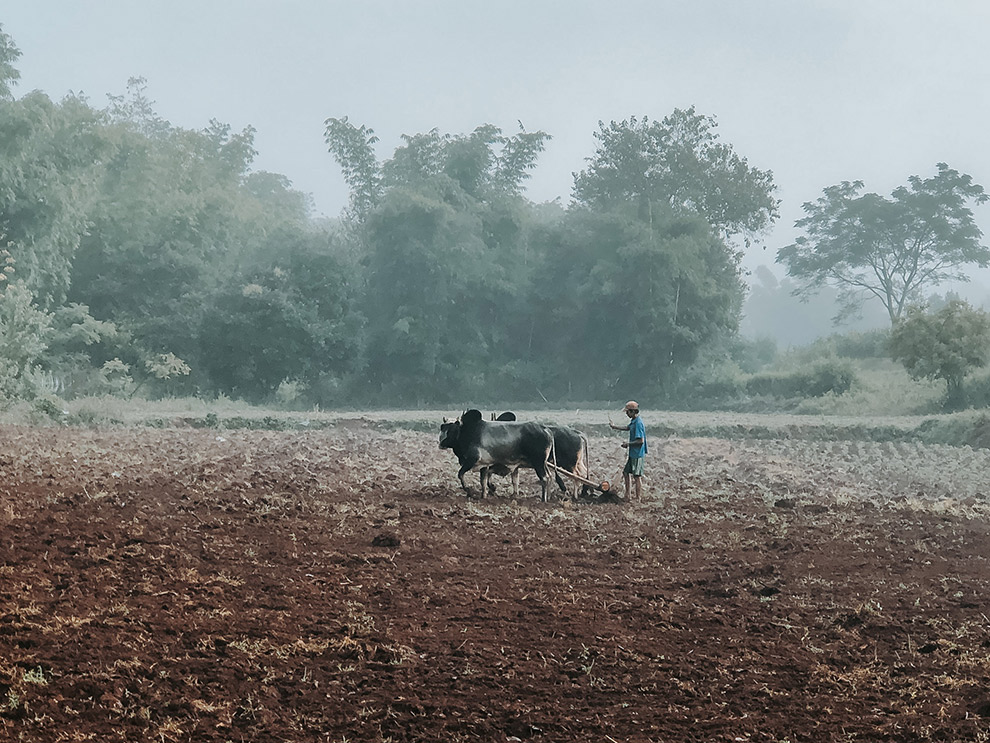 Waterbuffel werkt op het land op mistige ochtend in Myanmar