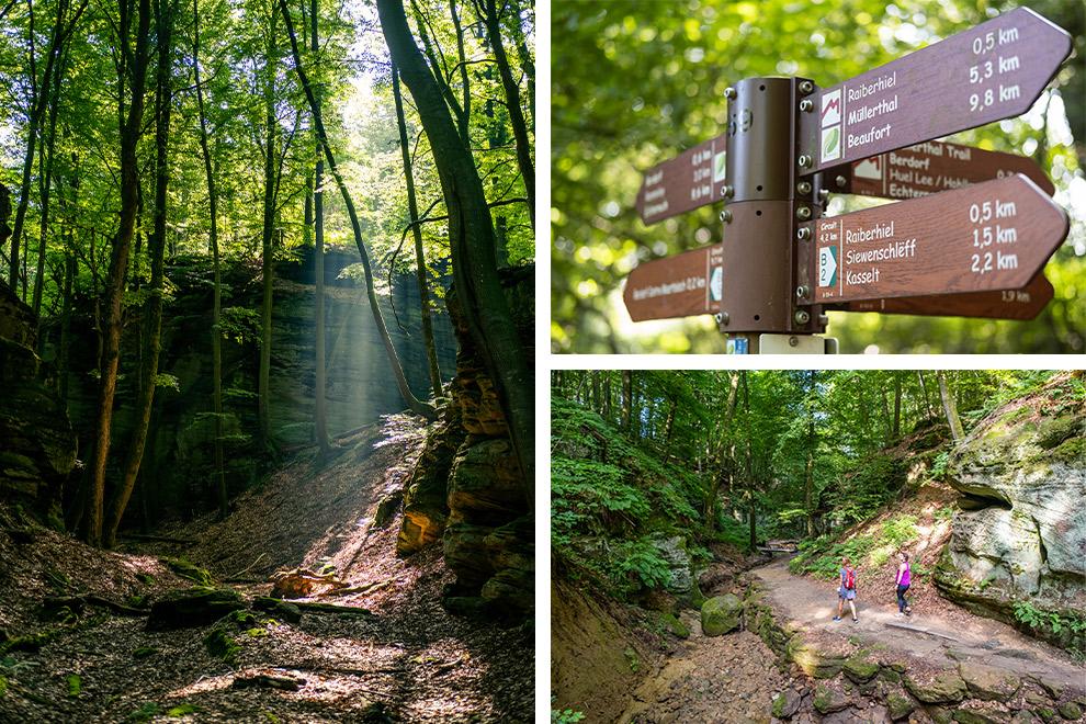 Wandelen door de groene bossen van Luxemburg op de Müllerthal Trail
