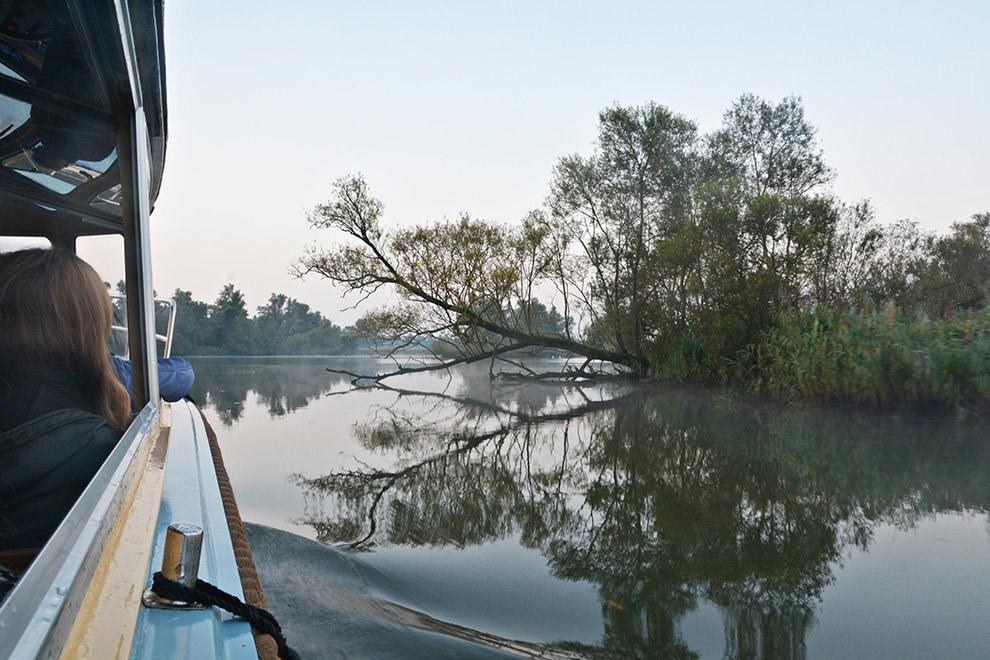 Fluistervaarttocht met bootje op het water in de Biesbosch