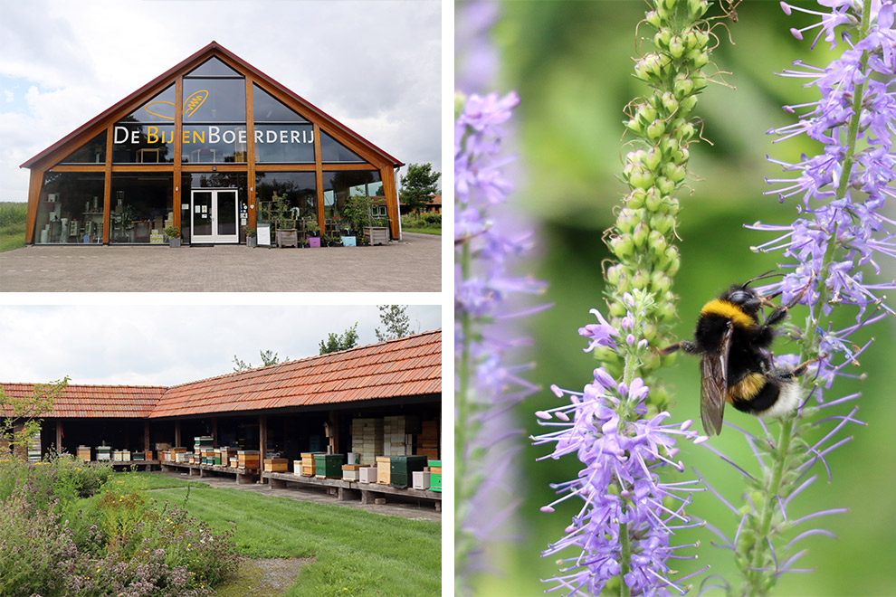 Bijen tussen de bloemetjes in de Bijenboerderij vlakbij Breda