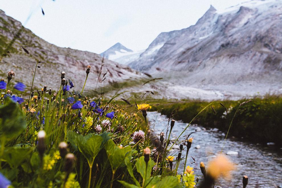 Groene bloemenvelden met Oostenrijkse bergen op de achtergrond