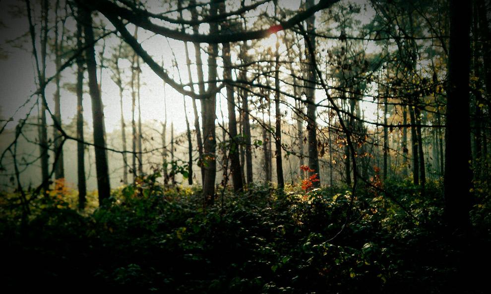 Het mysterieuze Helleketelbos