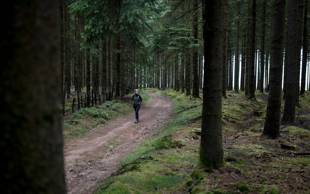 Wandelen door de bossen van Wallonië