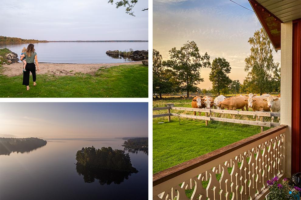Zweeds vakantiehuisje in het boerendrop Flattinge met koeien in de wei en stille wateren
