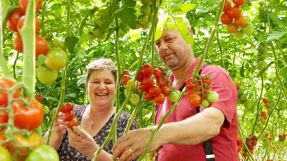 Man en vrouw staan trots tussen de tomaten van Natuurlijk Tomaat kwekerij