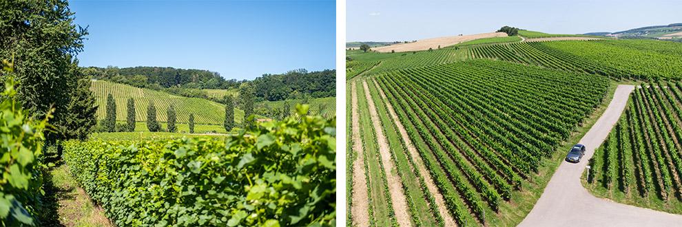 Rijden door de groene wijnregio in Luxemburg