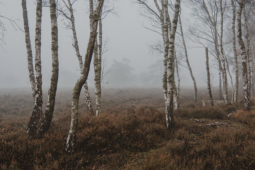 Mistige dag in bos vol kronkelende bomen