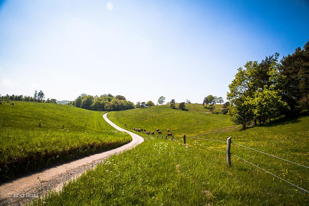 Wandelpad door groene heuvels in Mols Bjerge Nationaal Park