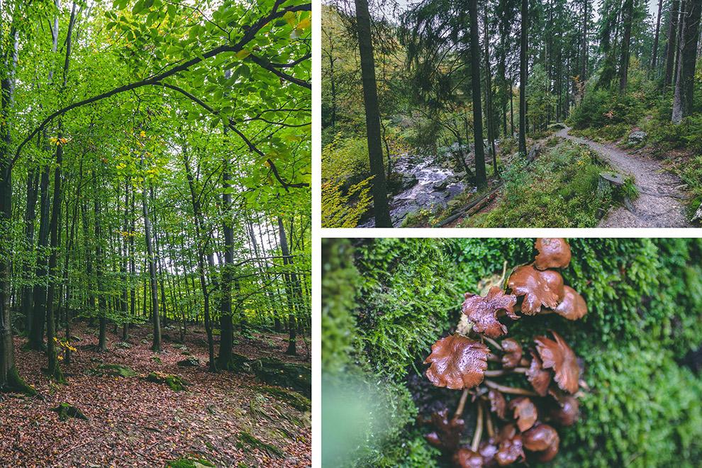 Paddenstoelen en stromend water in sprookjesachtig bos