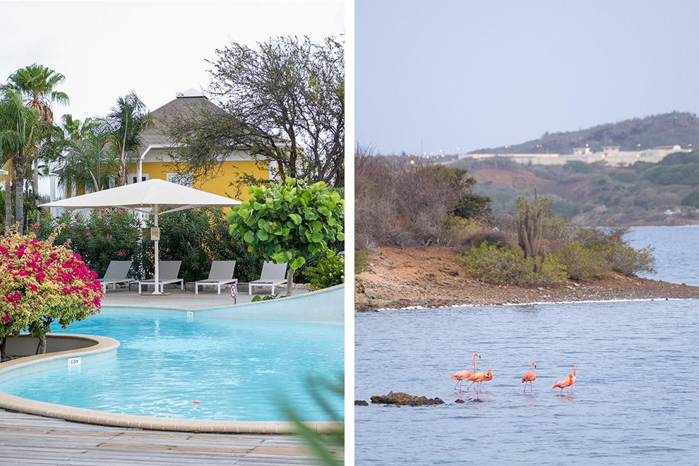 Flamingo's spotten en overnachten in het kleurrijke Chogogo resort in Curaçao