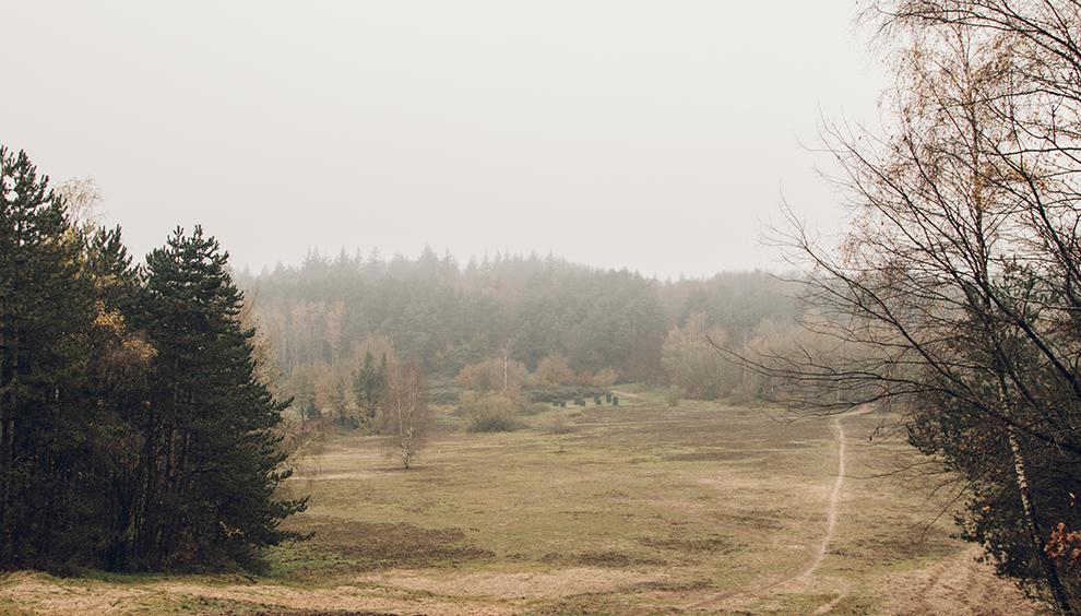 Winterse vlaktes in het uitgestrekte natuurgebied van De Hoge Veluwe