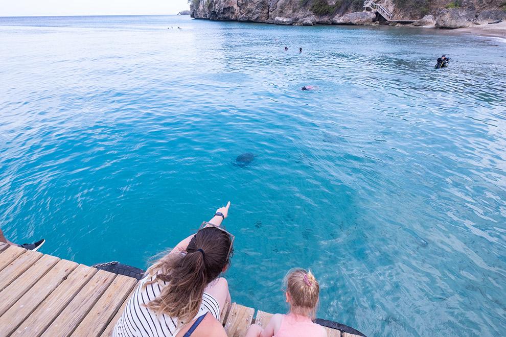 Schildpadden spotten in het helderblauwe water