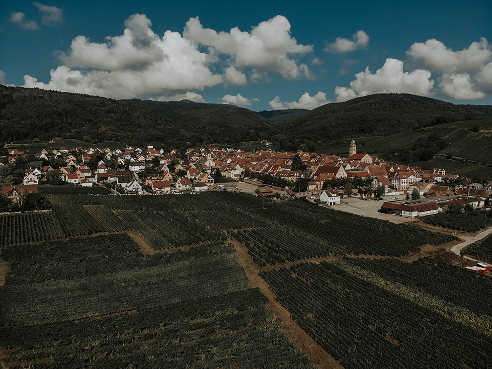 Wijnlandschap met groene velden en bewolkte blauwe lucht