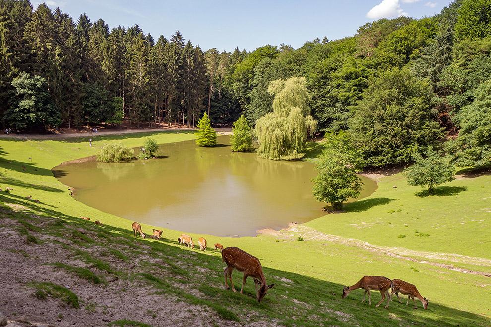 Wild spotten in het groene Wildpark Schwarze berge