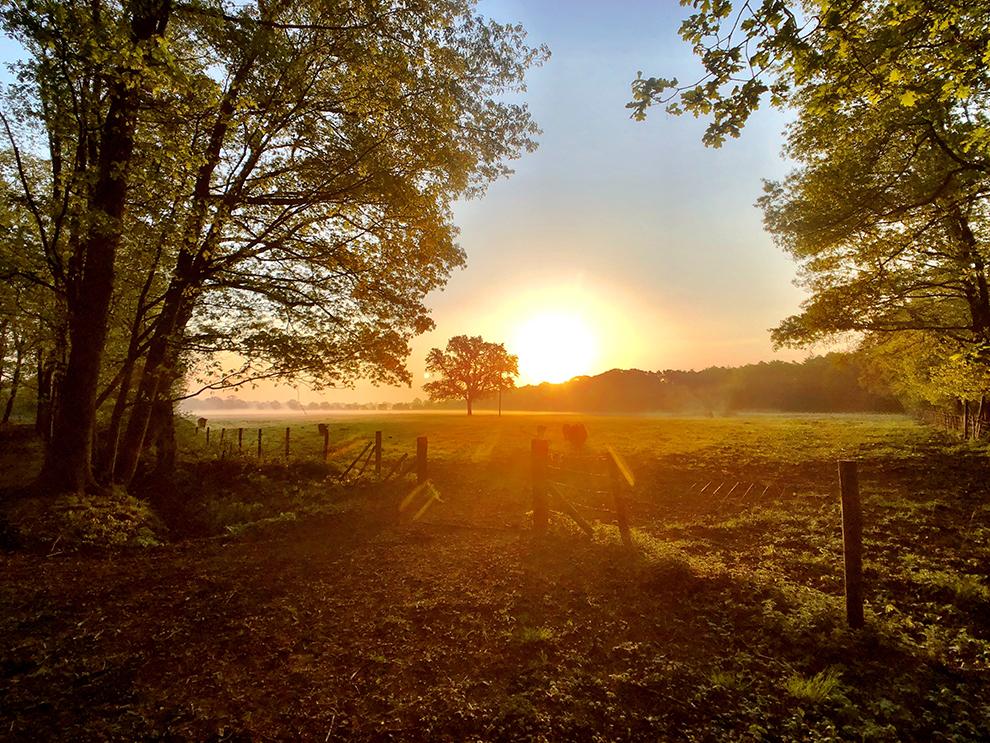 Zonsopkomst met uitzicht over Belgische weilanden
