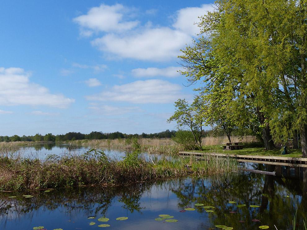 Waterlandschap in de Weerribben