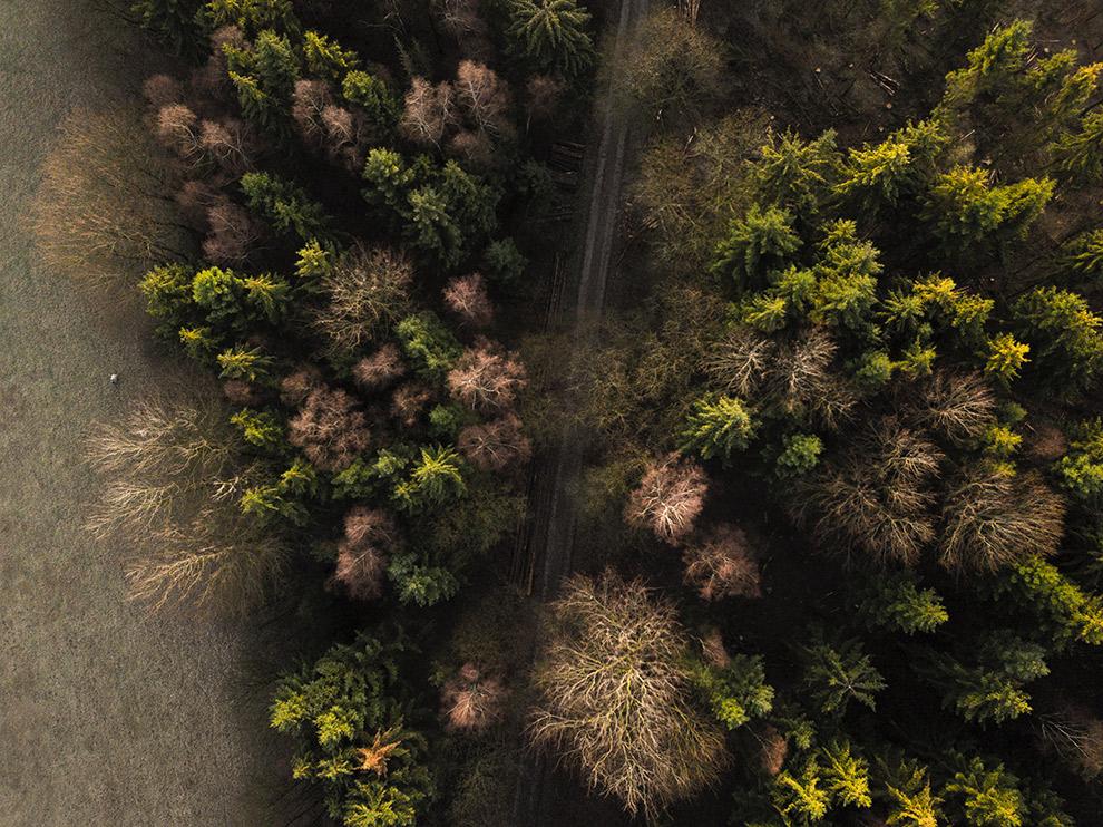 Drone foto van de kleurrijke winterse bossen van het Teutoburger Woud