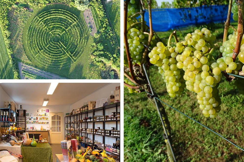 Wijngaard in Schijndel, Brabant