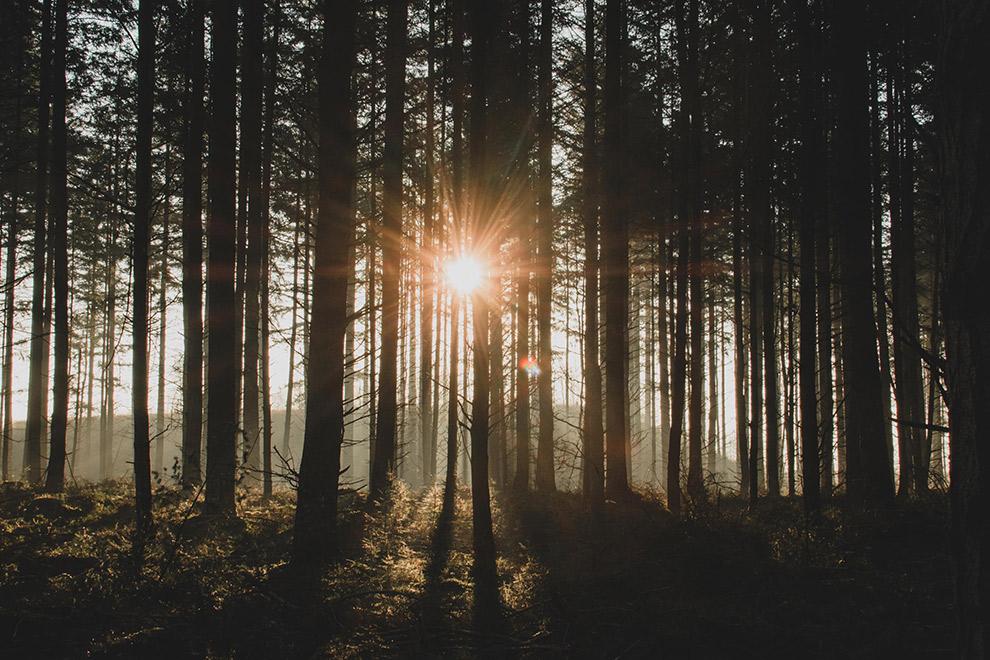 Zonnestralen schijnen tussen de bomen in het bos