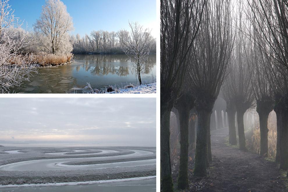 Bevroren winterlandschap van de Biesbosch