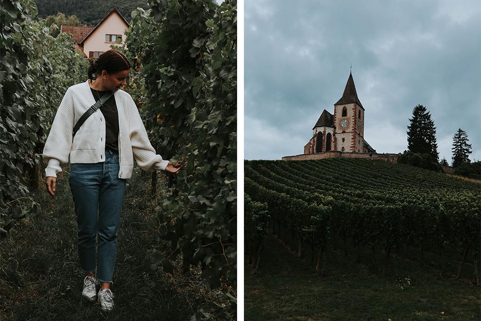 Wijngaarden met op de achtergrond een bijzonder kerktorentje