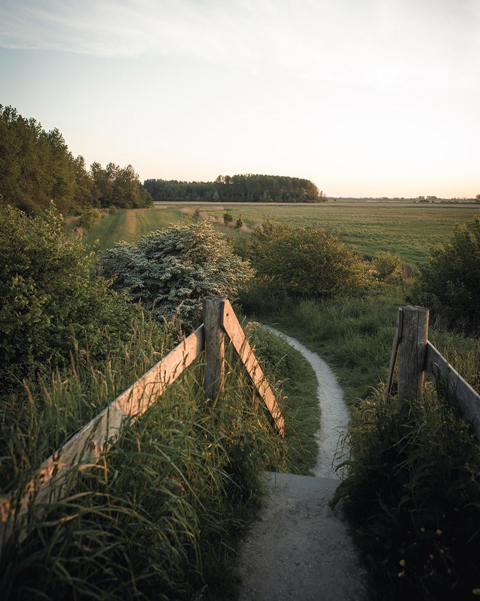 Wandelpad door de natuur van Nederland