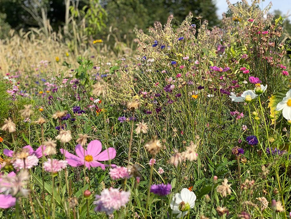 Veld vol bloemen in het Voedselbos in Waspik, Brabant