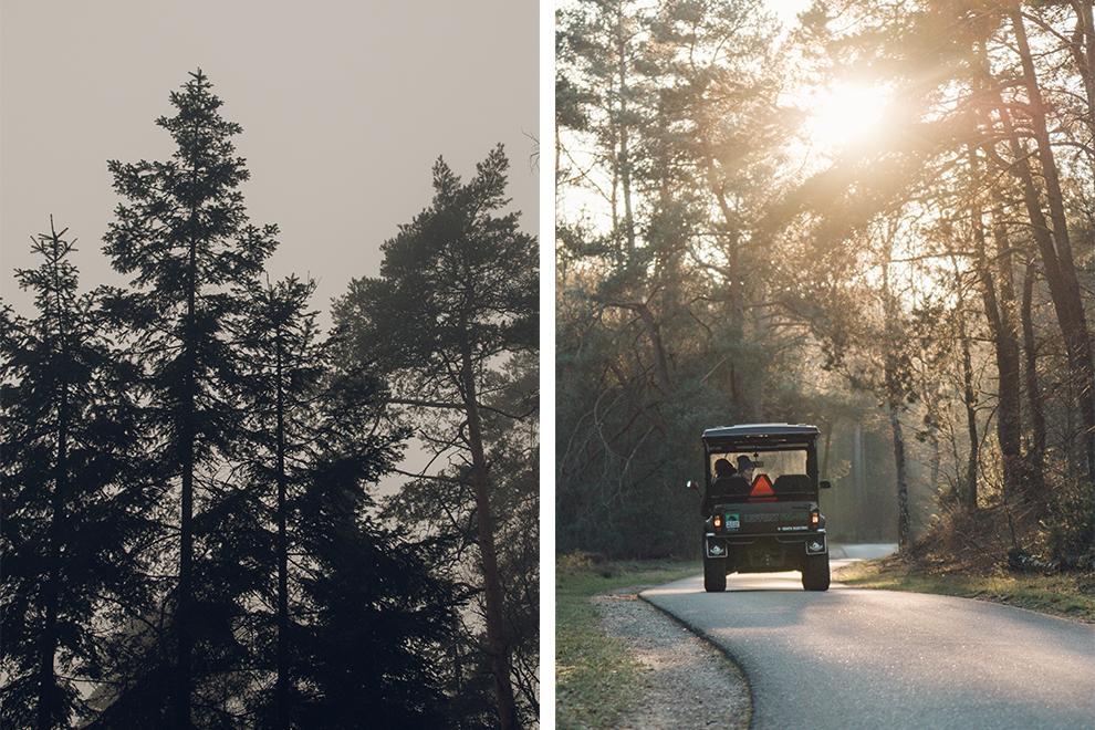 Met de elektrische buggy het boslandschap van De Veluwe ontdekken