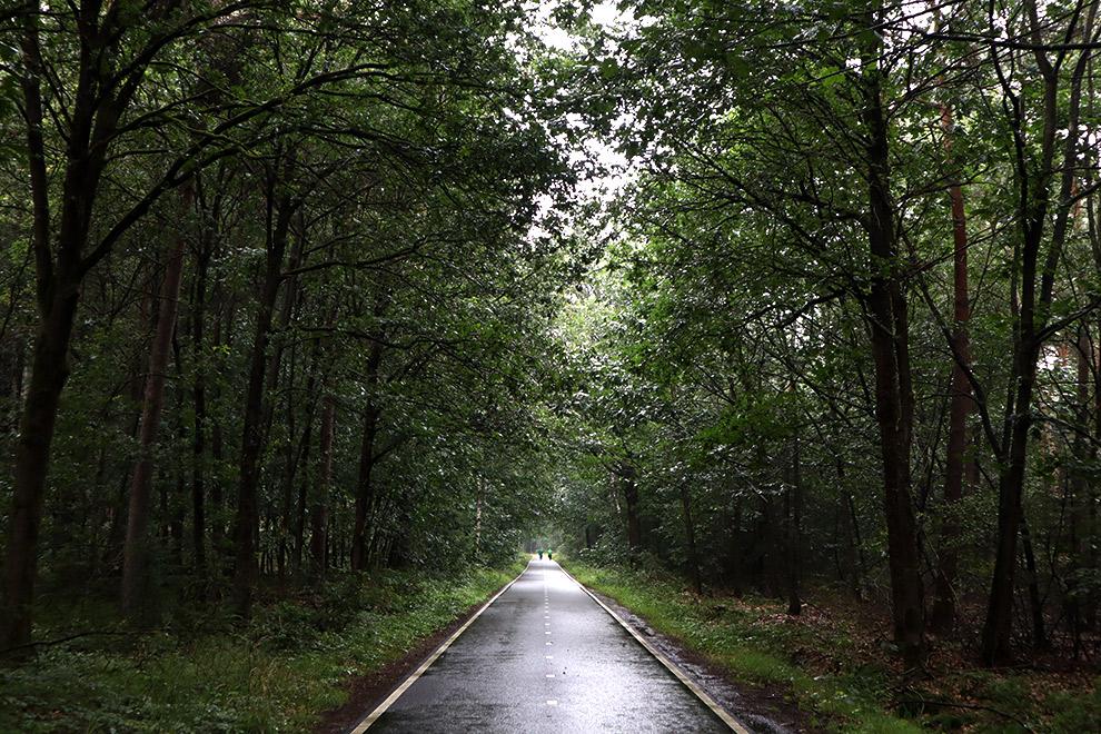 Fietsen door de Seterse bossen op een regenachtige dag