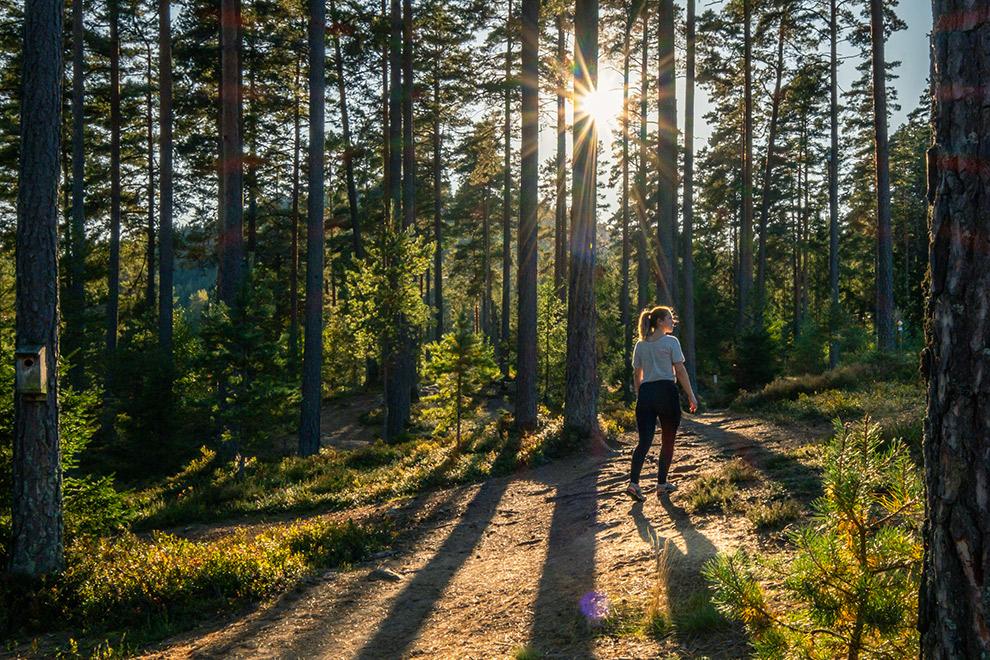 Wandelen in een bos in Zweden met wandellegging van Fjallraven