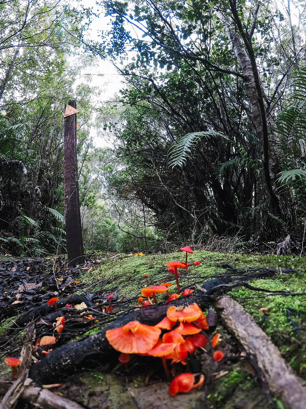 Bewegwijzering Te Puru track in Nieuw Zeeland