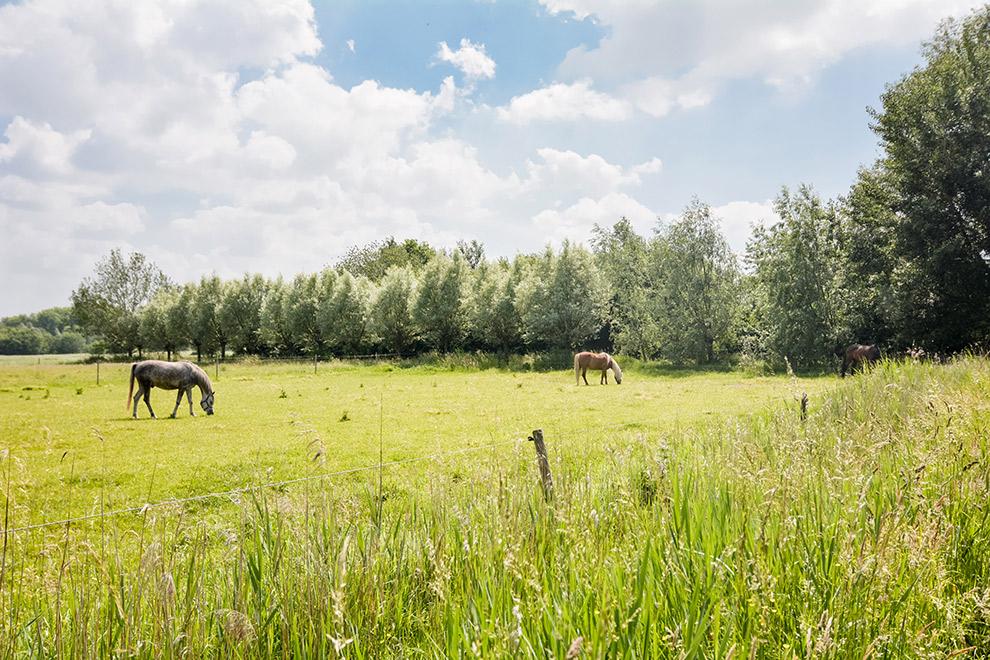 Paarden in de wei in Moerenburg Tilburg