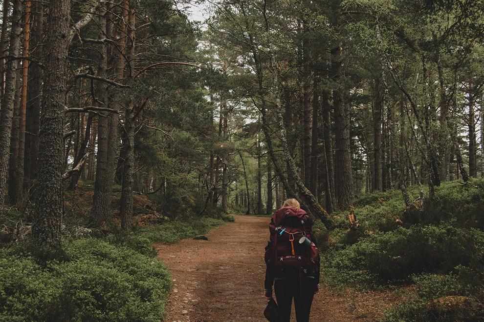 Wandelen door de bossen in Schotland