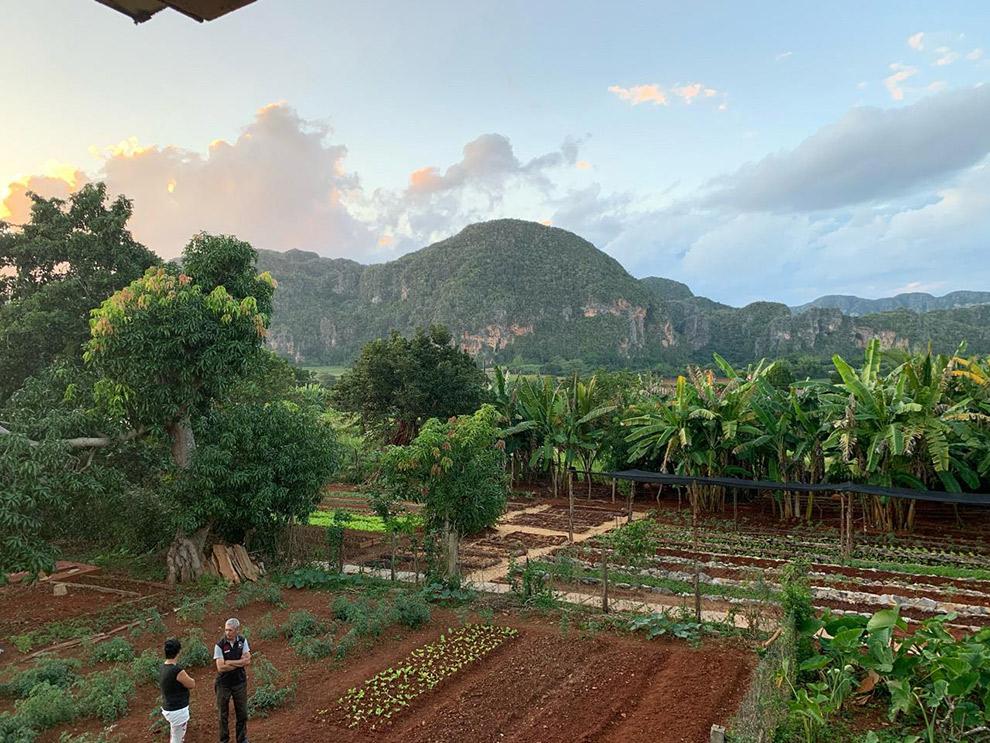 De vruchtbare grond van de Viñales Vallei in Cuba