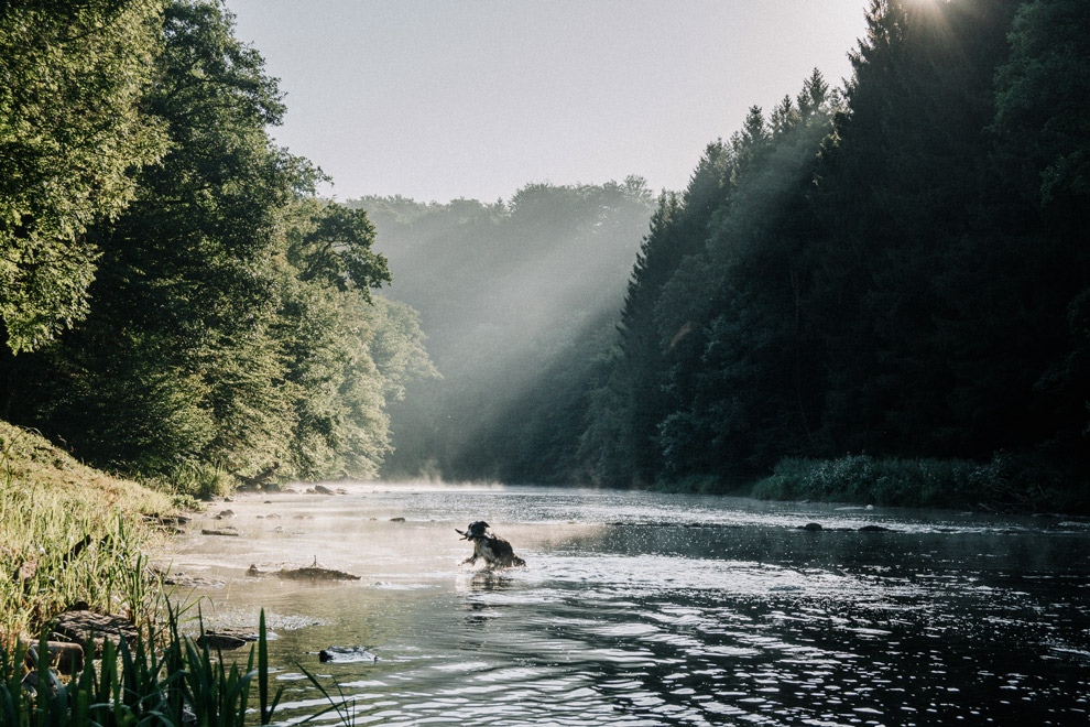Hond speelt in rivier de Semois
