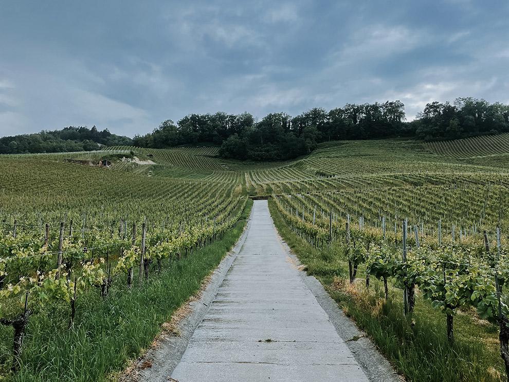 Uitzicht over wijngaard in de kleinste wijnregio van Zwitserland: Vully