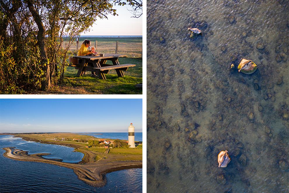 Zeehonden rusten op het water, moeder en dochter lunchen in de natuur