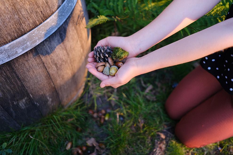 Een hand vol eikeltjes en dennenappels in het bos
