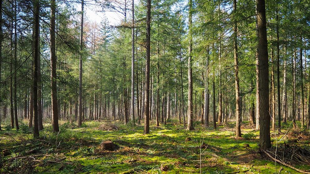 Groene hoge boven bij Nationaal Park de Hoge Veluwe
