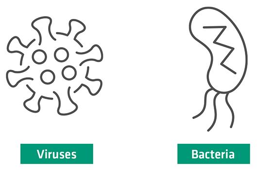 Virus & Bacteria